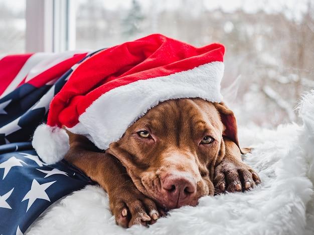 Mooie, charmante puppy van chocoladekleur en kerstversieringen