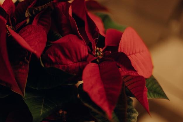 Mooie close-up shot van een bloem met rode bloemblaadjes en groene bladeren