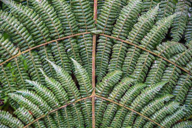 Mooie close-up shot van varenplanten verbonden door houten stokken