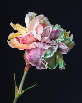 Mooie close-up van bloeiende bloem