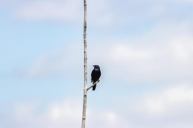 Mooie close-up van een blauwe oude wereldvliegenvanger op een tak