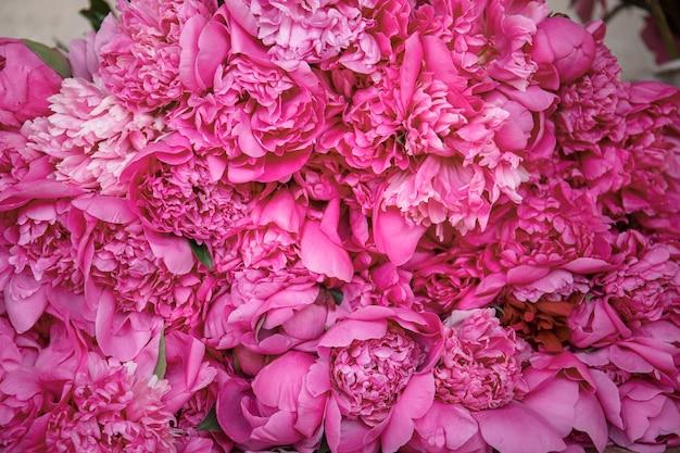 Mooie close-up weergave van eindeloze pioenrozen - romantisch concept