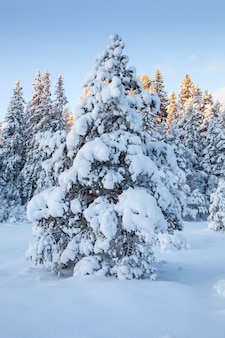 Mooie de sneeuwboom van het de winterlandschap
