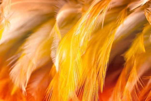 Mooie de textuur abstracte achtergrond van de kippenveer, zachte nadruk