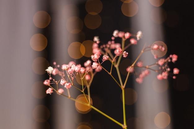 Mooie decoratie schattige kleine gedroogde kleurrijke bloemen op donker zwart, behang.