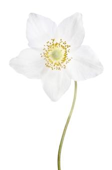Mooie delicate bloem geïsoleerd op een witte achtergrond