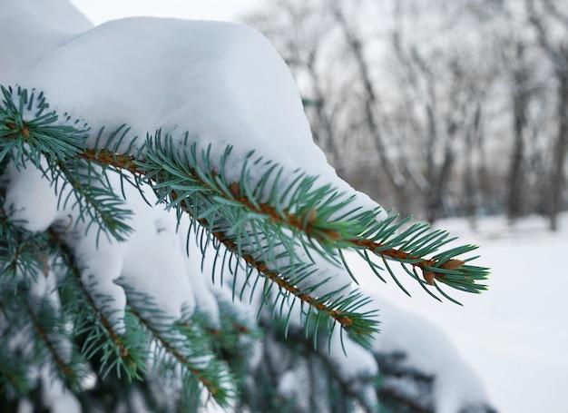 Mooie dennenboom bedekt met sneeuw van dichtbij