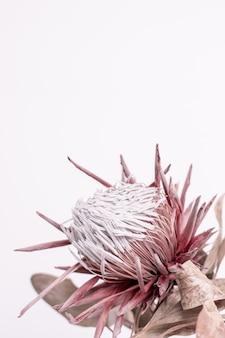 Mooie distel paarse bloem