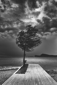 Mooie donkere zwart-wit foto van een enkele boom op een houten pier in de buurt van de oceaan