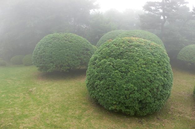 Mooie en overzichtelijke struiken in mistig japans park