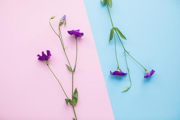 Mooie eustoma op veelkleurige papieren achtergronden met kopie ruimte. lente, zomer, bloemen, kleurenconcept, vrouwendag.