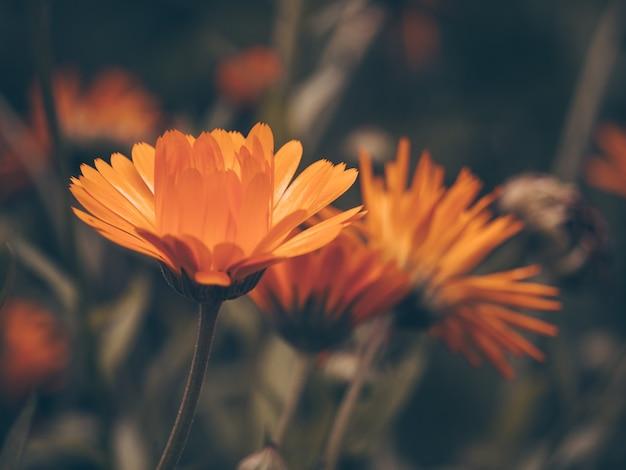 Mooie fee dromerige magische oranje bloem