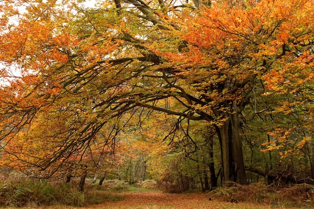 Mooie foto van bomen met kleurrijke bladeren in een herfstbos
