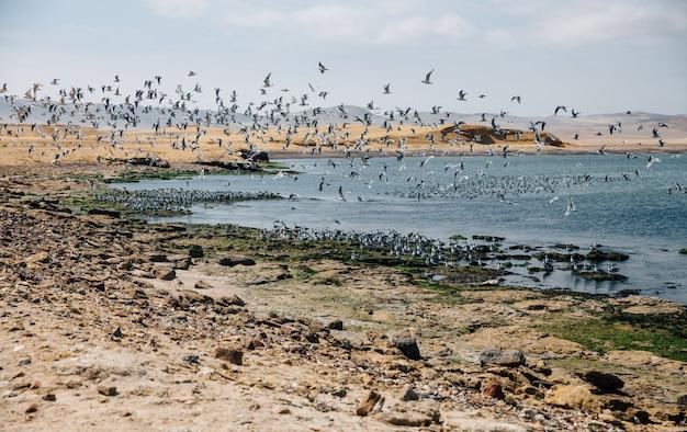 Mooie foto van vogels die over een meer en de kust vliegen onder een blauwe lucht