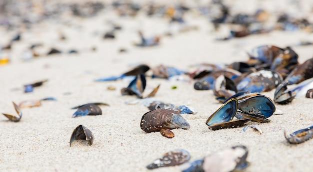 Mooie foto van zeemosselen op een zandstrand in kaapstad, zuid-afrika