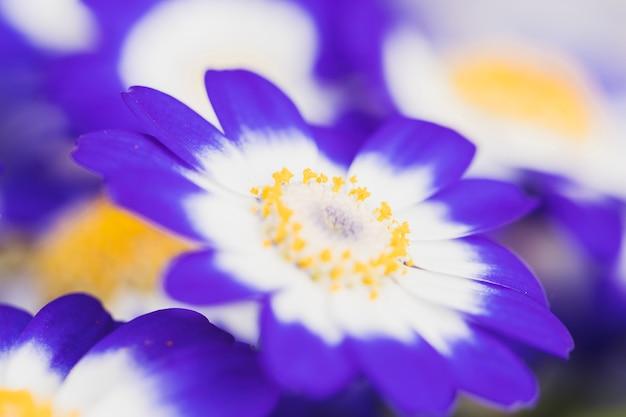Mooie frisse azuurblauwe bloesems