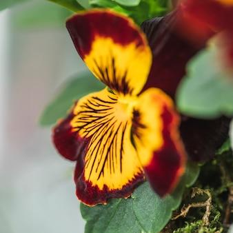 Mooie frisse kleurrijke bloei