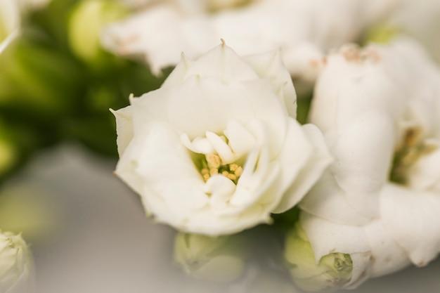 Mooie frisse witte bloemen