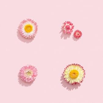 Mooie gedroogde bloemen, kleine bloesems op zacht roze
