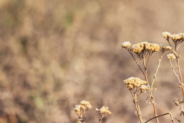 Mooie gedroogde planten, bloemen tegen een wazige natuur.