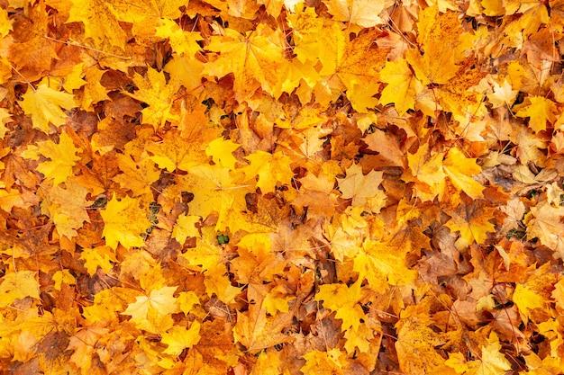 Mooie gekleurde gouden herfstbladeren op de grond, bovenaanzicht. geweldige gele herfst achtergrond. oranje gouden blad