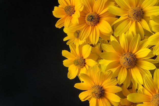 Mooie gele bloeiende bloemen op zwarte achtergrond
