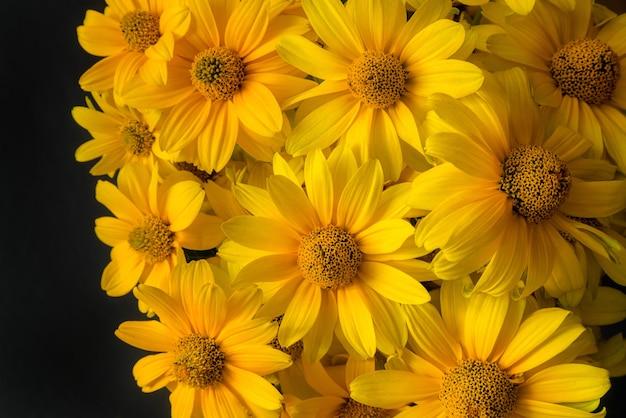 Mooie gele bloeiende bloemen op zwarte achtergrond.