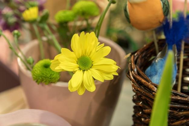 Mooie gele bloemen en knoppen in de potplant