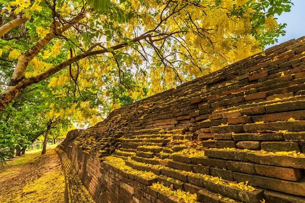 Mooie gele cassia fistula (golden shower tree) bloesem bloeien op boom rond de muur van gracht in chiang mai noord-thailand. reist in zuidoost-azië.