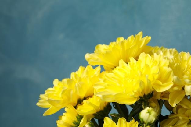 Mooie gele chrysanten op blauw
