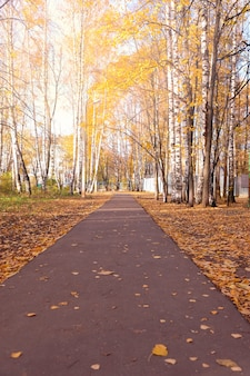 Mooie gele de herfststeeg in het bos.