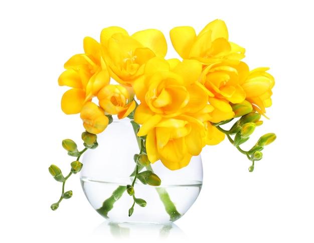 Mooie gele freesia's in vazen op wit