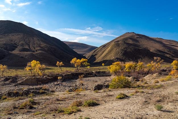 Mooie gele herfstbomen in de hooglanden