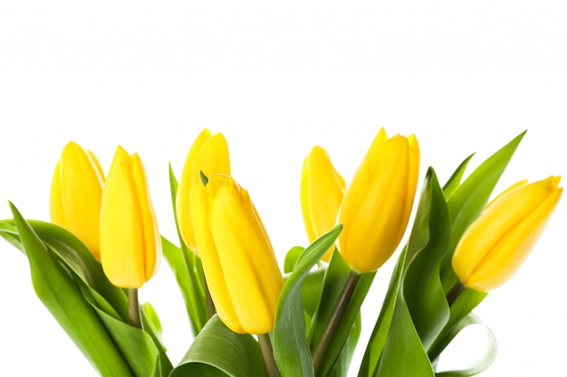 Mooie gele tulpen die op wit worden geïsoleerd