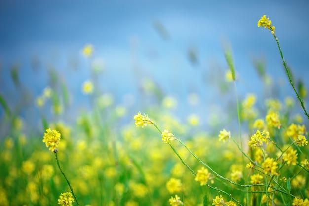 Mooie gele wildflowers in het groene gras.