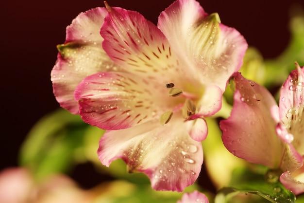 Mooie gelukkige vrouw met orchideebloem over roze ruimte