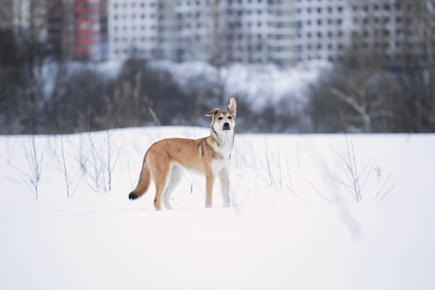 Mooie gemengd rashond staande op veld winterseizoen.