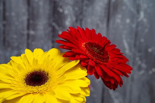 Mooie gerberabloemen in geel en rood.