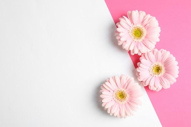 Mooie gerberabloemen op tweekleurige achtergrond, ruimte voor tekst