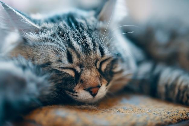 Mooie gestreepte kat die gelukkig rusten en in kattenbed slapen.