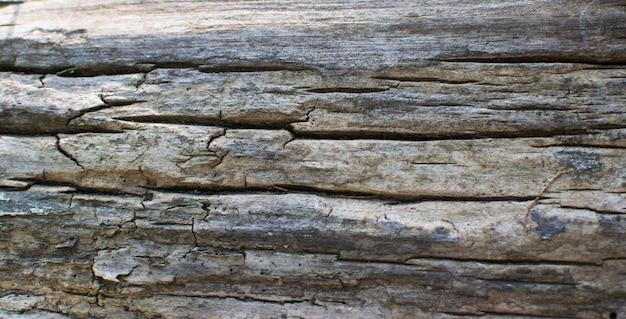 Mooie getextureerde oude boom. natuurlijke grijze achtergrond met ruimte voor tekst