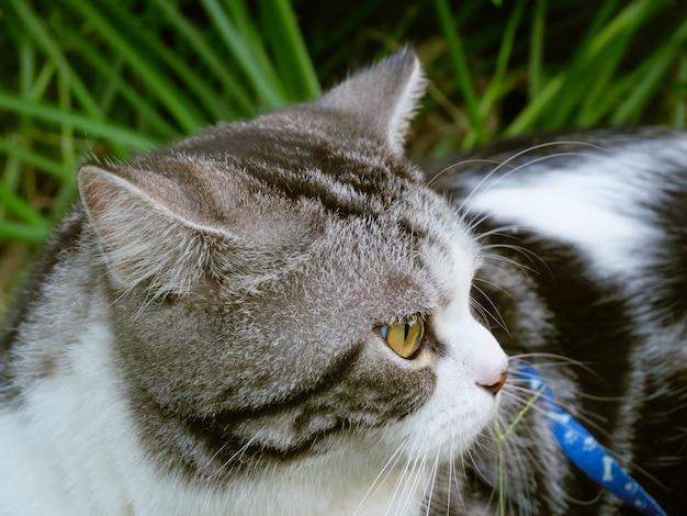 Mooie gezonde kat met mooie gele ogen op vers groen gras buiten in de ochtend