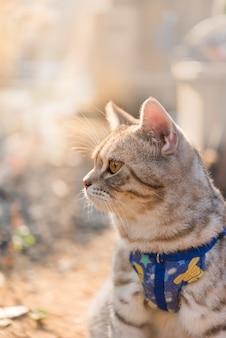 Mooie gezonde kat