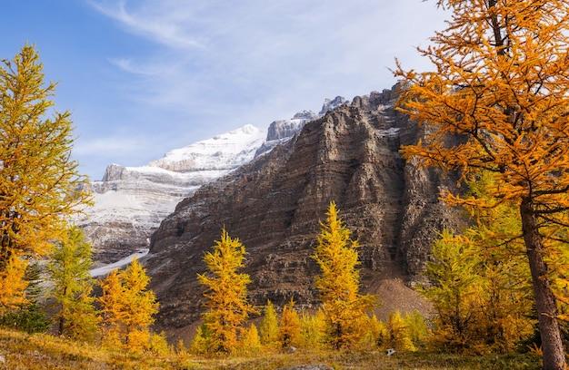 Mooie gouden lariksen in bergen, herfstseizoen.