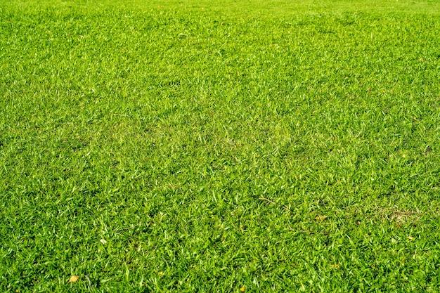 Mooie graslandachtergrond in de zomer