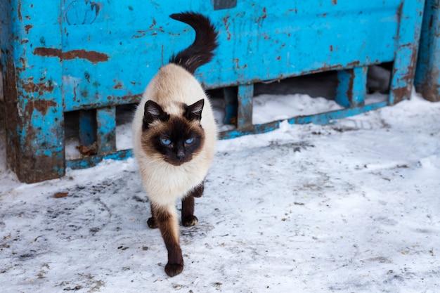 Mooie grijze bruine kat met blauwe ogen, op een straat