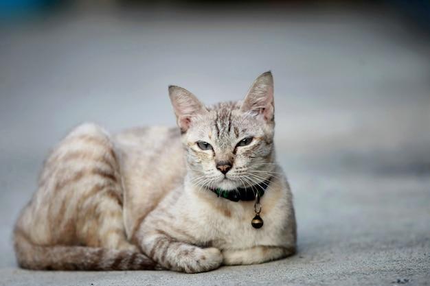 Mooie grijze kat zit buiten