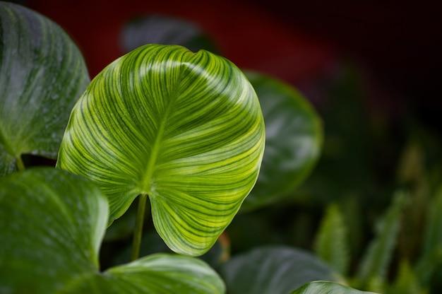 Mooie groene bladeren in de tuin