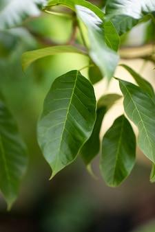 Mooie groene bladeren in het regenseizoen