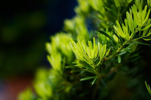 Mooie groene bladeren met zonlicht
